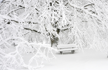 Canva - Snow Covered Bench Near Snow Covered Bare Tree